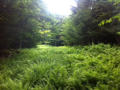 Saranac Lake NY Residential Lots & Land For Sale: $69,900