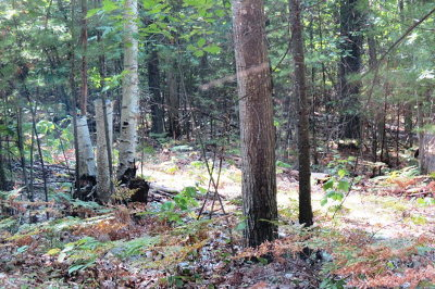 Essex County Residential Lots & Land For Sale: Lot 72 Summit Lane