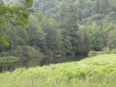 Saranac Lake NY Residential Lots & Land For Sale: $30,000