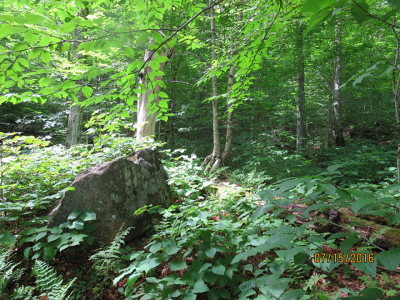Saranac Lake NY Residential Lots & Land For Sale: $29,000