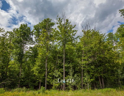 Residential Lots & Land For Sale: 16 Outlook Lane