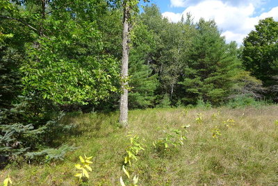 Essex County Residential Lots & Land For Sale: Lot#2 Lenny Preston Road