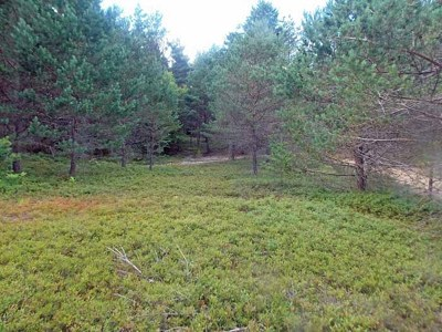 Residential Lots & Land For Sale: 697 County Route 50