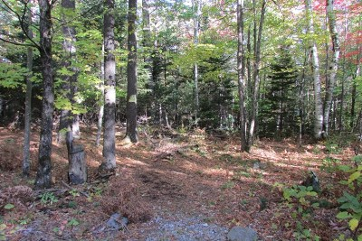 Essex County Residential Lots & Land For Sale: Lacy Road