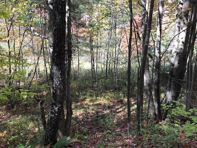 Saranac Lake Residential Lots & Land For Sale: 70 Ledge Lane