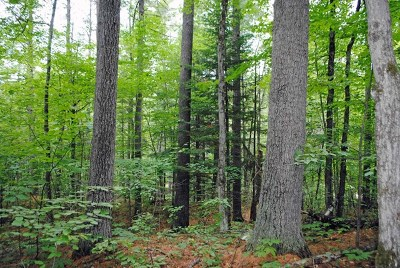 Essex County Residential Lots & Land For Sale: Evergreen Lane