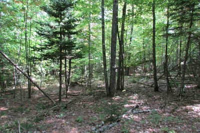 Essex County Residential Lots & Land For Sale: Route 9n