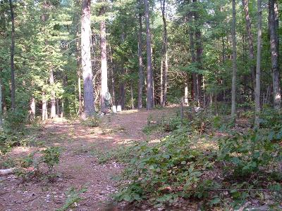 Essex County Residential Lots & Land For Sale: Nugent Lane