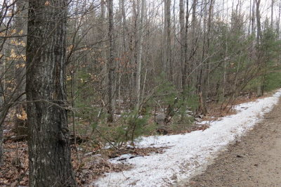 Essex County Residential Lots & Land For Sale: 118 Tannenbaum Lane