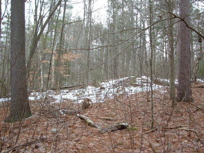 Essex County Residential Lots & Land For Sale: 175 Algonquin Lane