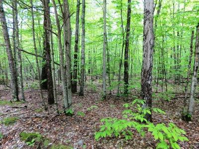Essex County Residential Lots & Land For Sale: Oneida Ln