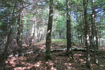Essex County Residential Lots & Land For Sale: Ranney Way