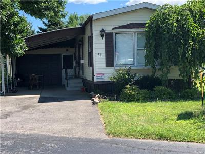 West Seneca Single Family Home For Sale: 45 Alsace Street