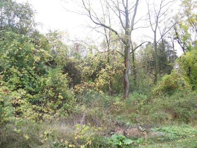 Residential Lots & Land Sale Pending: Jackson Road