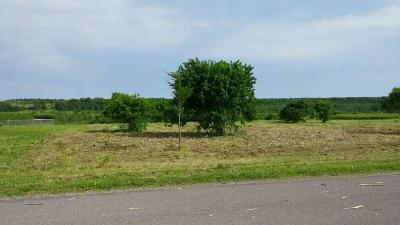 Cape Vincent Residential Lots & Land A-Active: / Huff Road