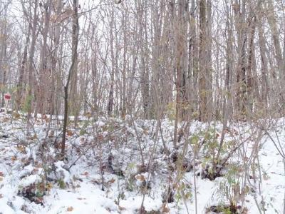 Chautauqua County Residential Lots & Land A-Active: 7578 Martin Wright Road