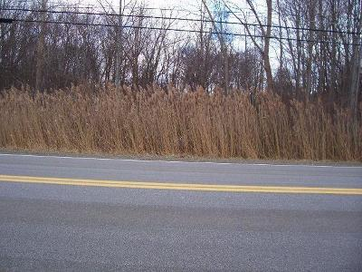 Residential Lots & Land A-Active: Van Buren Road