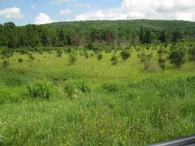 Allegany County, Cattaraugus County Residential Lots & Land For Sale: 8838 County Road 16