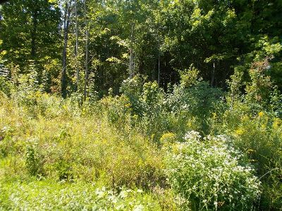 Silver Creek Residential Lots & Land For Sale: Christy Road