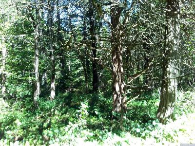 Cairo NY Residential Lots & Land For Sale: $29,000