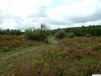 Taghkanic NY Residential Lots & Land For Sale: $184,000