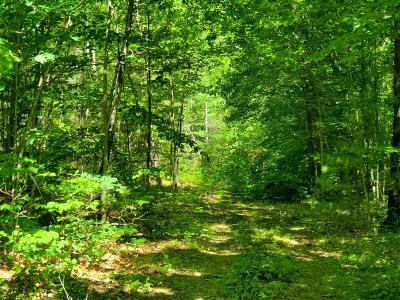 Mayfield Residential Lots & Land For Sale: 298 Progress Rd