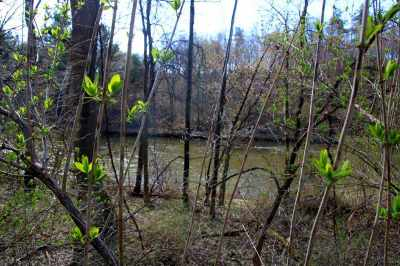 Washington County Residential Lots & Land For Sale: Rt 29