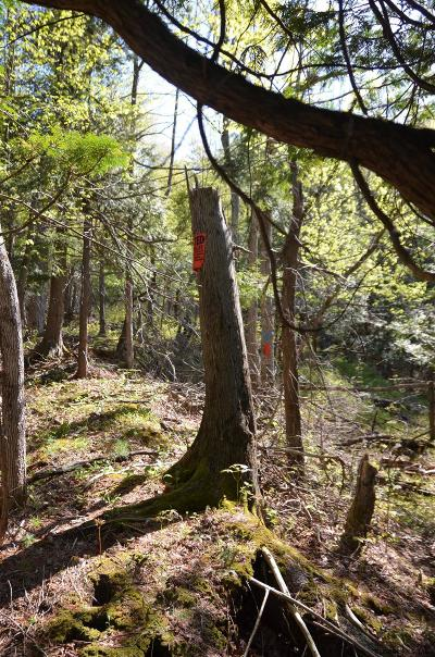 Essex County Residential Lots & Land For Sale: Trout Pond Rd