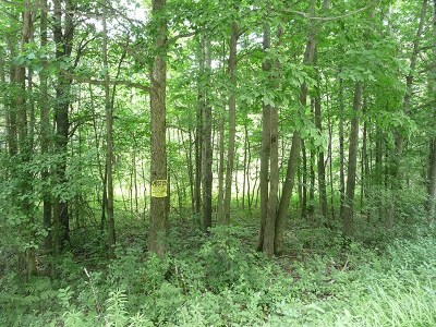 Schuyler County Residential Lots & Land For Sale: Lot17/18 Steam Mill Road