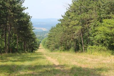 Lots and Land For Sale: Upper Footes Hill Rd.