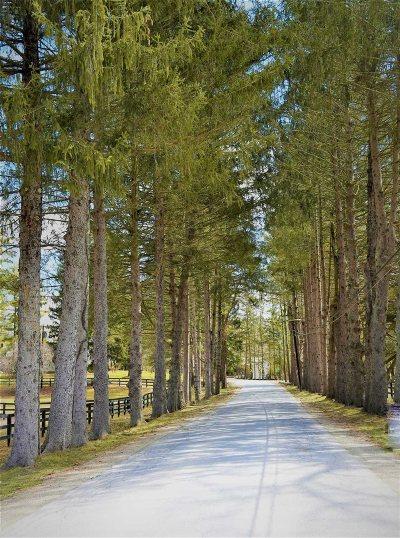 Pawling Single Family Home For Sale: 42 Brady Brook Farm