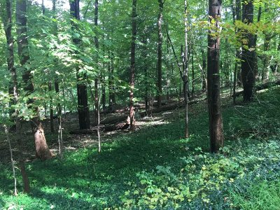 East Fishkill Residential Lots & Land For Sale: 320 Hosner Mountain Road