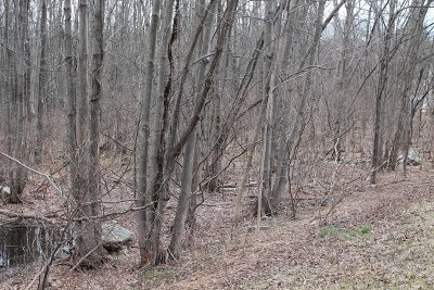 East Fishkill Residential Lots & Land For Sale: 3745 Route 52