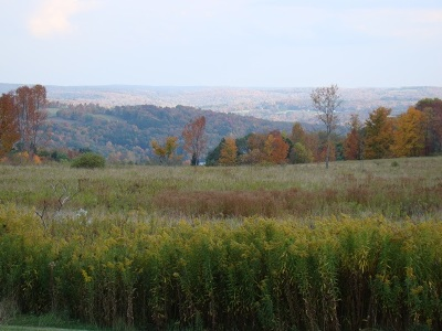 Callicoon Residential Lots & Land For Sale: (32.6) Beechwoods Rd