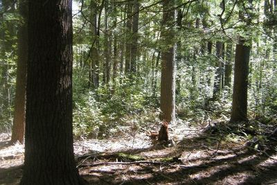 Glen Spey Residential Lots & Land For Sale: Hollow Rd.