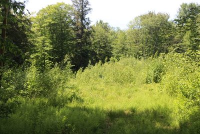 Roscoe NY Residential Lots & Land For Sale: $71,000