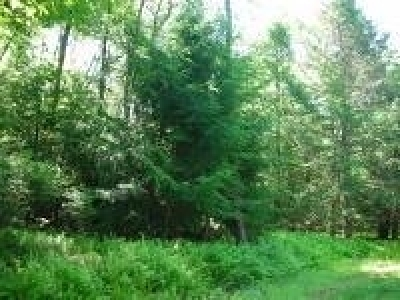 Glen Spey NY Residential Lots & Land For Sale: $11,000