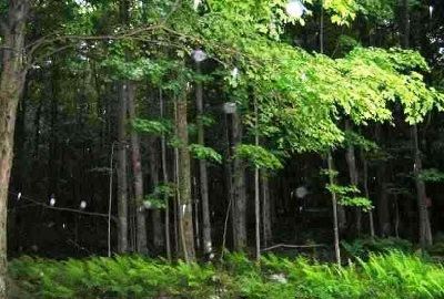 Fallsburg NY Residential Lots & Land For Sale: $9,900