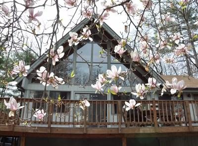 Rock Hill Single Family Home For Sale: 39 W Lake Shore Drive