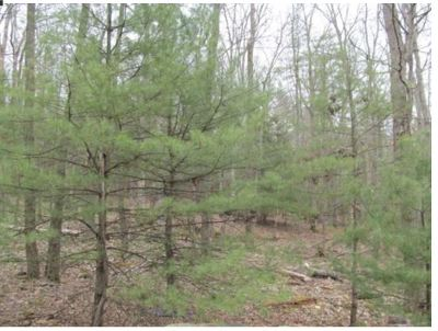 Narrowsburg Residential Lots & Land For Sale: Lat 47 Forest Rd