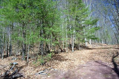 Callicoon Residential Lots & Land For Sale: Barbara Drive
