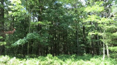 Residential Lots & Land For Sale: 18.15 Nys Rt. 97