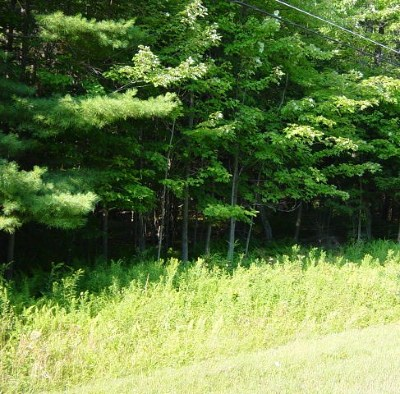 Cranberry Lake Residential Lots & Land For Sale: 7281 Sh 3