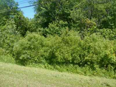 Massena Residential Lots & Land For Sale: County Route 42