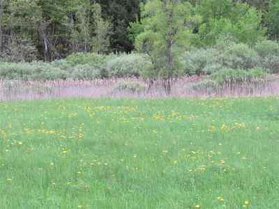 Gouverneur Residential Lots & Land For Sale: Cr 22
