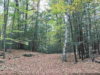 Woodstock NY Residential Lots & Land For Sale: $229,000