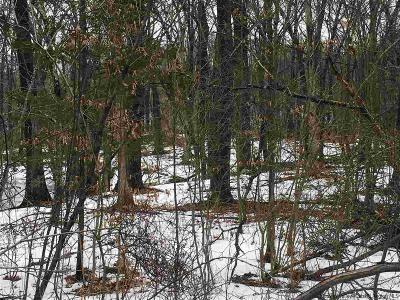 Ulster County Residential Lots & Land For Sale: 715 Broadway