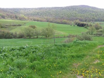 Delaware County Residential Lots & Land For Sale: Roses Brook