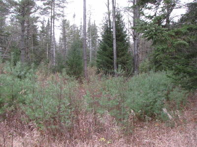 Essex County Residential Lots & Land Contingent Contract: Morse Memorial Highway