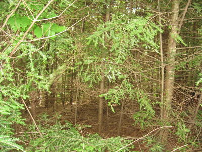 Essex County Residential Lots & Land For Sale: 00 Wonderview Lane